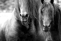 Wild Wild Horses ... / Passion, nature, love