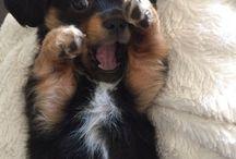Hunde/Welpen/süß