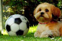 Cutes / Football jea