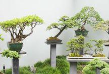 Jardim e Plantas