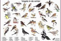 Tekenen - Hava Groep 6 Winter