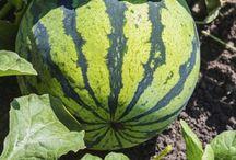 Vegetable :))
