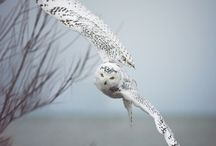 Gorgeous Owls