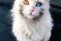 Blå og hvit