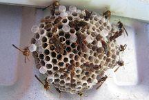 Insekter / Slip for hvepse