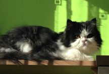 Czarnuch <3 / my cat