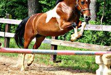 Kone ♥