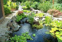 pond garden inspiration