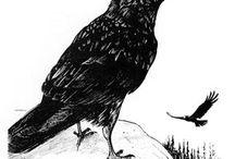 All things Raven / by Carleton University