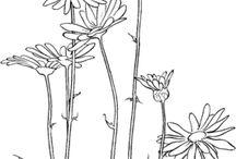 Gobelin/Drawings