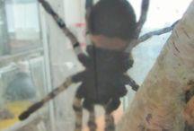 hämähäkkeja