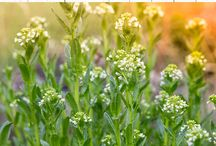 Garden Weeding Tips & Techniques / Want to rid your garden of weeds? Don't we all! You'll find our favorite tips from around the web here.
