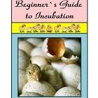 information teaching