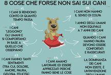 Love dog ❤️