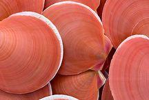 Colours - Rózsaszín