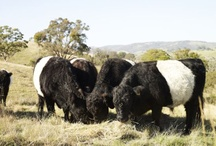 Belties / by jan claussen