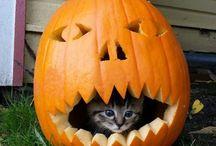 Udanego Halloween