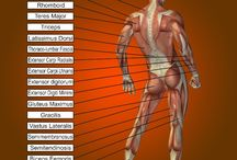 Medical Posters / medical posters, medical poster