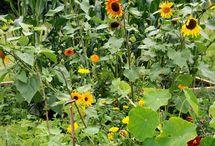 Vegetables Garden