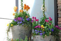 Vasos floridos