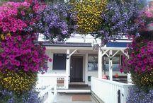 Ampel-plants. / BLOMSTER-SVEIN, Grette gartneri (Den lille Krydderhaven) Nøsteveien 120 3400 Lier N    Tlf. 94179050 svop@getmail.no    www.gartnern.com