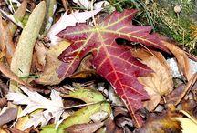 Colori Autunno / I bellissimi Colori dell'Autunno presso Euro Plants Vivai.