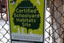 School yard habitat