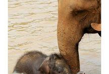 ELEPHANTS!! EEEKK