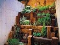 Ambientes Botánicos