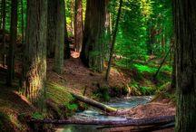 Il bosco.