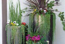 květiny v nádobách, truhlíky