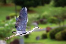 Bird Sanctuaries in Telangana / Sanctuaries in india: Here you can get information about all Bird Sanctuaries in india, National Parks, Forests in Telangana, India.