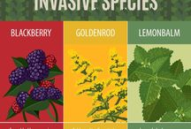 Invasive Species / Keep an eye out for invasive species with these tips and tricks. Avoid letting them take over your garden!