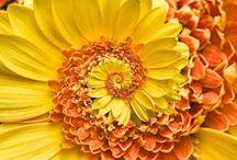 I heart the Fibonacci sequence