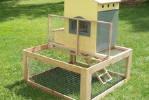 Farm Wise / One day I WILL own chickens....
