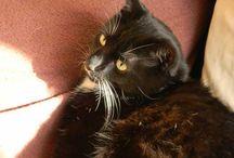 koty / zdjęcia moich kotów