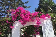 Santorini / Moje wielkie greckie wakacje. Lipiec 2016.