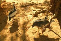 Paisagens  belas na cidade de janaúba MG Brasil / Um olhar diferente na natureza