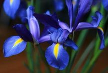 Nature / Цветы и т д