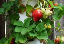 Creative Gardening / Ideas for small gardens, potted colour, hanging baskets and veggie patches