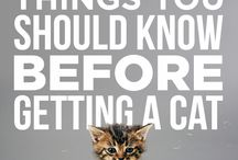 Tips & Tricks for Cats / Helpful hints for cat owners!