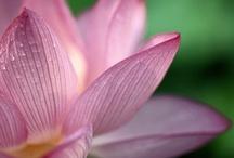 flowers  / by Crystal Still