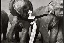 Richard Avedon / Photographs by Richard Avedon