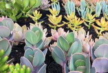 Sensational Succulents / Bright, gorgeous succulents for pure inspiration! How to's on propagating and taking care of succulents.