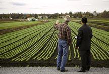 Proiecte agricultura