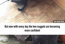 Animals amaze