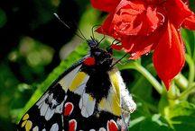 Garden / Gardens, flowers, wildlife wonderment / by Mary Keane