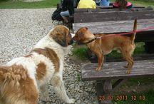 Zwierzki w Villi Hubertus / Koty,psy i inne stworzenia,które mieszkają w naszej Villi i w naszym ogrodzie.