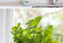 Indoor plants and herbs