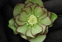 Flora / by Susan Richter